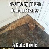 A cute cat doing geometry