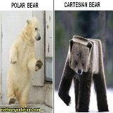 How a cartesian bear looks like