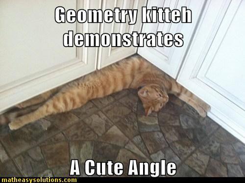 m101 a cute angle cat a cute cat doing geometry memes math easy solutions,Geometry Memes
