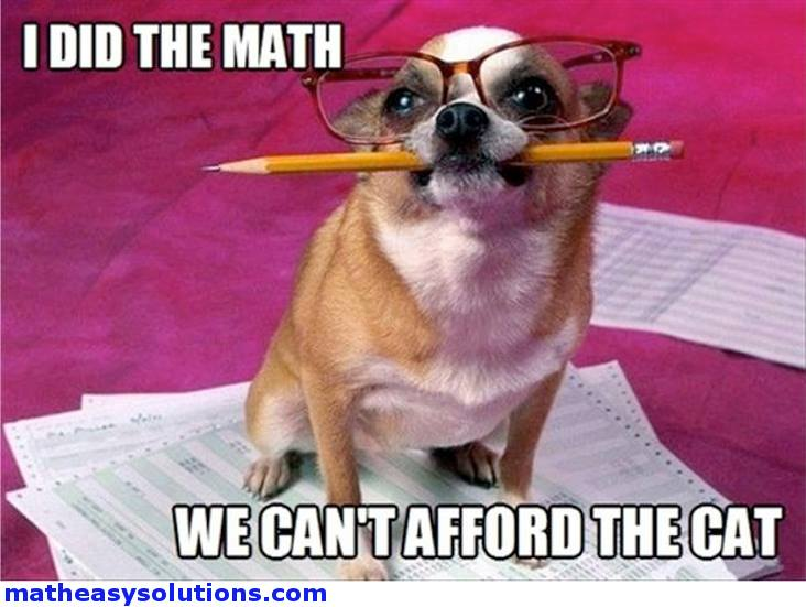 Dog concludes we cant afford the cat